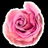 Ikebana Floristas